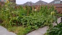 Maxwell Community Garden